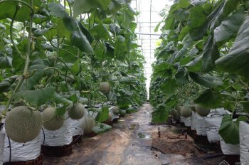 Siêu hot! Lần đầu tiên xuất hiện tại Việt Nam, cơ hội đầu tư duy nhất lợi nhuận cao, LH 0987859091