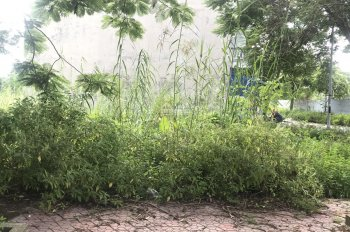 Bán lô đất cực rẻ tại khu phân lô An Trì, Hồng Bàng, Hải Phòng