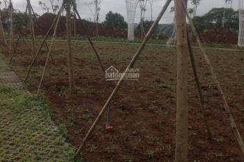 Bảo Lộc đất nền DT 500m2 giá 450 triệu, gần KDL thác DamBri, đầy đủ tiện ích