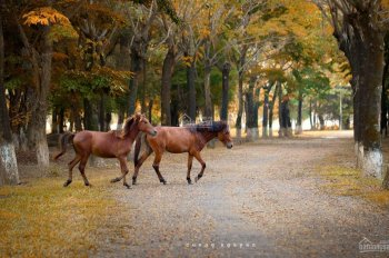 Bán đơn lập Vườn Tùng diện tích 370m2, hướng Đông Nam, nhà hoàn thiện, giá 20,5 tỷ. LH 0948014568