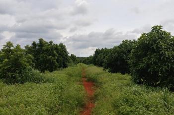 Bán trang trại 27.5ha huyện Lộc Ninh, Bình Phước