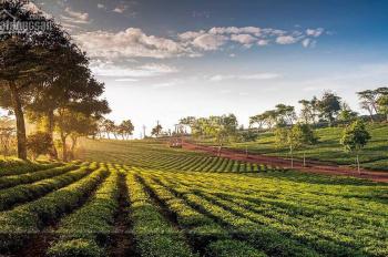 Green Valley mở bán giai đoạn 2 view đồi thông nghỉ dưỡng Bảo Lộc 800.000đ/m2 LH: 0931232361