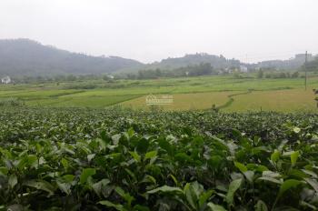 Bán 3600m2, view đẹp nhất Yên Bài, Ba Vì, mặt đường chính Liên Xã, có 200m2 thổ cư. LH: 0982607994