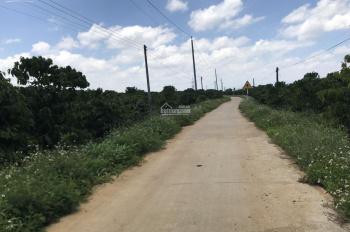 Đất đã có sổ sẵn, gần Bảo Lộc Golden City, bán rẻ cho anh/chị đầu tư, mặt tiền đường 12m