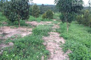 Chính chủ - bán đất rẫy (có sẵn sầu riêng, bơ ghép, xoài Thái, điều) - 086848068 Ms Uyên