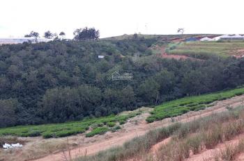 Bán đất nông nghiệp đẹp, ngay đồi chè Cầu Đất (Cầu Đất farm) thích hợp làm du lịch, trang trại