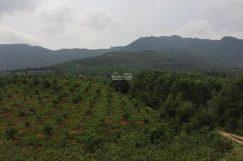 Đất dành cho nhà đầu tư, trong đô thị Hòa Lạc view hồ, giá chỉ có 45 triệu/sào (360m2)