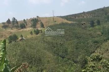 Bán gấp đất nông nghiệp 6700m2, sổ người Kinh, 2 tỷ 1