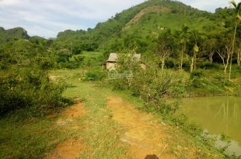 chuyển nhượng 5000 m2 đất thổ tại khu sinh thái Hồ Dụ kỳ sơn tỉnh hòa bình