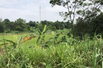 Bán 2600m2 đất trang trại nghỉ dưỡng view cánh đồng, xã Yên Bài, Ba Vì, HN