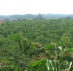 Chính chủ cần bán đất tại thôn Thiện Chí, xã Ninh Gia, Đức Trọng, Lâm Đồng