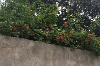 Bán đất SĐCC tại Phường Thụy Phương, Q Bắc Từ Liêm, Hà Nội, hướng Nam mát mẻ, gần cấp1,2,nhà trẻ