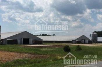 Bán đất trại gà, diện tích hơn 2000m2, sang lại với giá chỉ 555 triệu/sổ, LH 0902.988.803