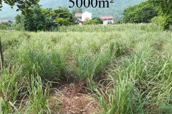 Cần bán 720m2 và 5000m2 đất tại thôn Thắng Đầu, xã Hòa Thạch, huyện Quốc Oai, Hà Nội 0966331159