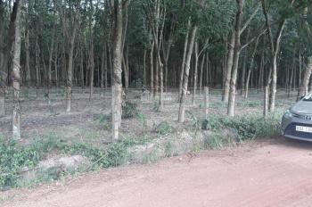 Bán đất mẫu 62923m2 (hơn 6ha) và 10,8ha tại xã Tân Định, huyện Bắc Tân Uyên, Bình Dương