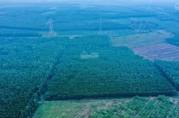 Chính chủ cần bán hơn 2.7 ha đất trồng cây ở xã Xuân Thành, huyện Xuân Lộc, tỉnh Đồng Nai