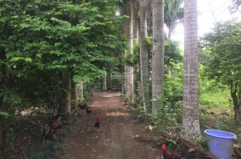 Cần bán 3200m2 đất đã có khuôn viên cơ bản giá vô cùng hấp dẫn tại xã Nhuận Trạch, Lương Sơn, HB