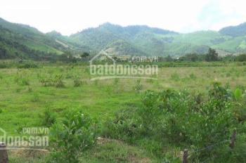 Trang trại cần bán gấp 35 ha đã có nhà, cây ăn quả đã có thu hoạch