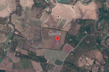 Bán 8 hecta rẫy trồng tiêu tại Ea Nuôl, cách Buôn Ma Thuột 15km