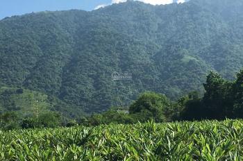Cần chuyển nhượng lô đất 1900m2 đã có khuôn viên tường bao xung quanh tại Tiến Xuân, Thạch Thất, HN