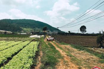 Bán đất sào KLong, Hiệp An, Đức Trọng, Lâm Đồng. DT: 4.068m2
