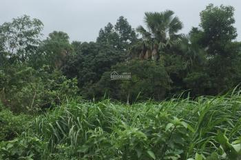 Bán gấp 3571m2 đất ở đã có khuôn viên nhà vườn tại xã Ba Trại, Ba Vì, Hà Nội