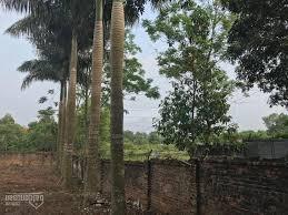 Đất quá đẹp, sát vành đai công nghệ cao Hòa Lạc 30m, diện tích 100m2 vuông đẹp, giá chỉ 10 triệu/m2