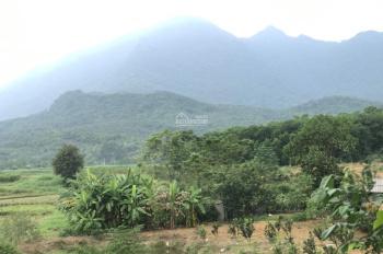 Cần bán lô đất 5000m2 Thôn Rùa, Vân Hoà, Ba Vì, Hà Nội. View đẹp không khí thoáng mát