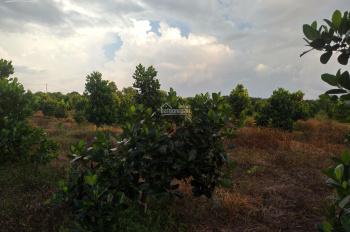 Bán đất vườn mít, sầu riêng tại huyện Định Quán, tỉnh Đồng Nai