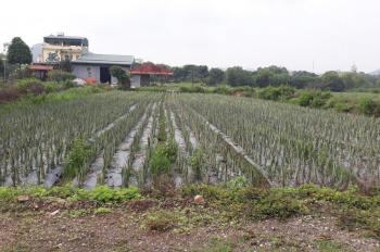 Chính chủ cần bán mảnh đất tổ 7 Phường Tây Sơn Tam Điệp Ninh Bình. DT 100m2. LH 0865369825