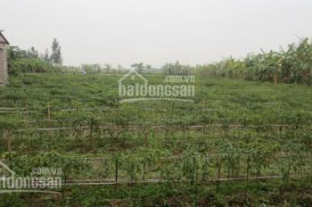 Chú Hai lên Sài Gòn sống với con trai nên bán 2000m2 đất mặt tiền Quốc Lộ 13 - Bình Dương