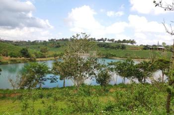 TT đặc biệt về sản phẩm đất nền biệt thự nghỉ dưỡng ngay khu vực du lịch nghỉ dưỡng TP. Bảo Lộc