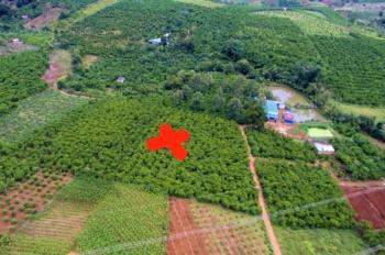 Bán đất triền đồi ngay suối, sổ đỏ Lộc Tiến, Bảo Lộc, giá chốt 8,8 tỷ