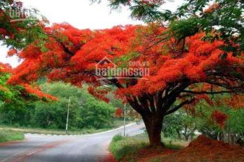 Bán đất  mặt đường Thanh Niên, giá rẻ giật mình tại  Đồ Sơn, Hải Phòng, LH: 0934259799