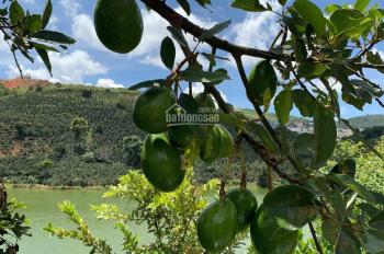 Chính chủ cần bán 3500m2 đất view đẹp chuyển thổ cư 100% ngoại ô TP Đà Lạt, giá 6,5 tỷ