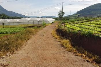 Kẹt tiền cần bán gấp đất nông nghiệp Đà Lạt 900 triệu. Lh: 0389790699