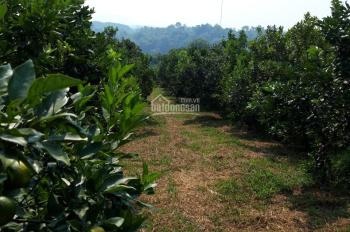 Bán đất trang trại tỉnh Hòa Bình