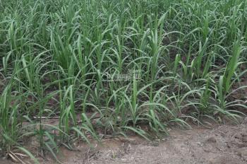 Còn lô đất nông nghiệp Phước Khánh, giá rẻ chỉ 750 triệu/1000m2