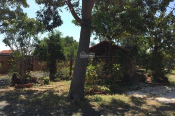 Cho thuê kinh doanh nhà vườn biển Phước Hải 3300m2