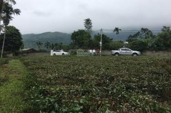 Cần bán 3368m2 đất vị trí đẹp, phù hợp nhiều tiêu chí tại xã Yên Bình, Thạch Thất, Hà Nội