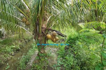 Đất vườn dừa, DT: 4879m2 (16,4m x 297,3m), cách đường xe tải nhỏ 300m, giá: 1,3 tỷ