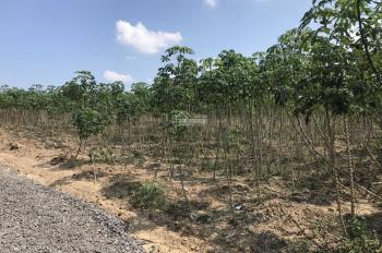Cần bán 6 sào rưỡi giá 200 triệu/1000m2 tại Phú Ngọc, huyện Định Quán, tỉnh Đồng nai