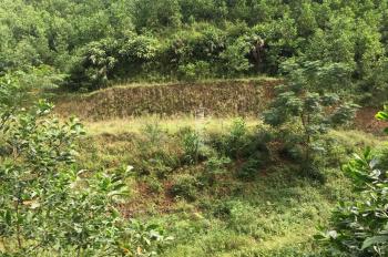 Bán 3 ha xã Yên Trung, Huyện Thạch Thất, Hà Nội