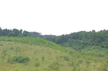 Cần bán 9150m2 đất tại Lương Sơn, phù hợp làm homestay, phân lô hoặc trang trại nhà vườn