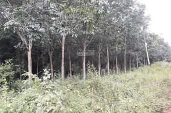 Bán 2 lô đất cao su mới mở miệng 1 năm mặt tiền đường liên huyện qua Hớn Quản và Bình Long