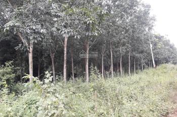 Bán 1 ha đất rẫy có 260m2, mặt tiền đường Liên Huyện tại Đồng Phú, Bình Phước