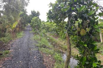 Đất Bến Lức đất vườn xã Thạnh lợi