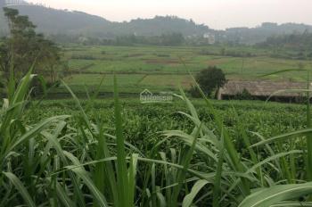 Bán đất thổ cư tại Thôn Quýt, xã Yên Bài, Ba Vì. Giá 330tr/sào