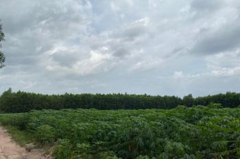 Bán lô đất đẹp, giá rẻ, MT lớn 105m, đường 5m, gần đường Hùng Vương, xã Vĩnh Thanh, Nhơn Trạch