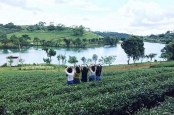 Đất nền siêu phẩm Bảo Lâm chỉ 295 tr/125m2, view hồ, đồi thông. Liên hệ 0902580736
